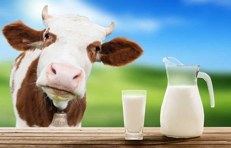Полезни ли са млечните продукти и как се съчетават с Кето?